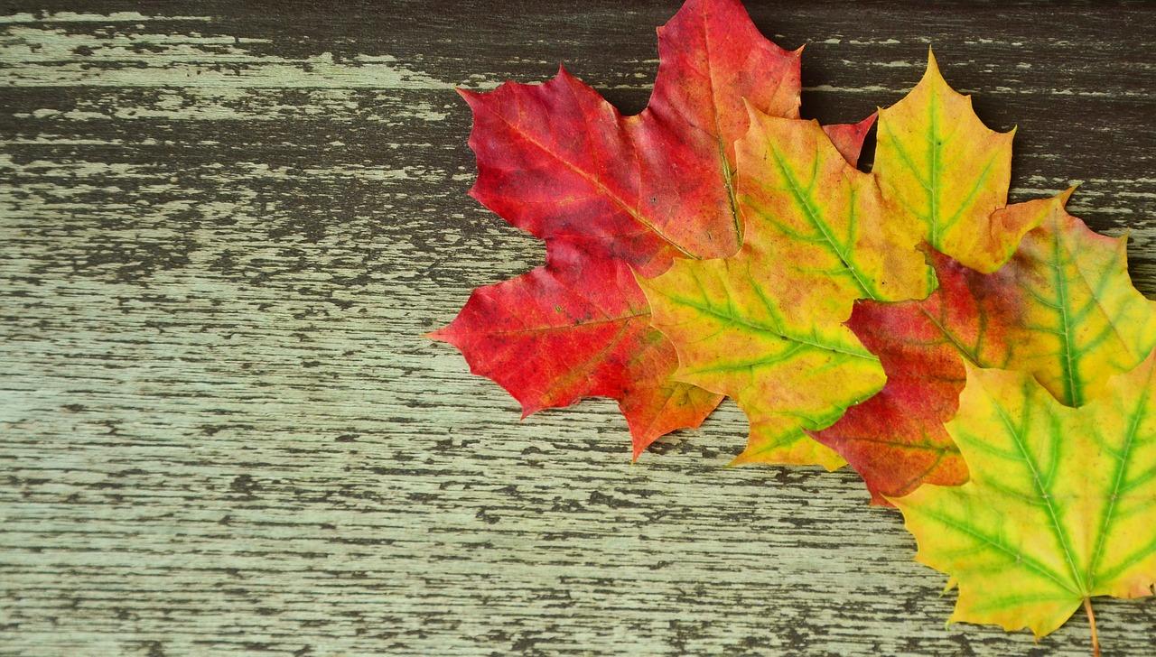 Herbst – Zeit zum Innehalten, Nachdenken und Erinnern